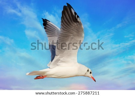 Flying seagull against the blue sky - stock photo