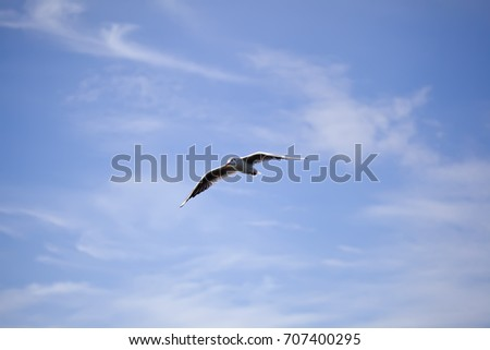 Flying seagull against the blue sky background. Wild nature of Russia.
