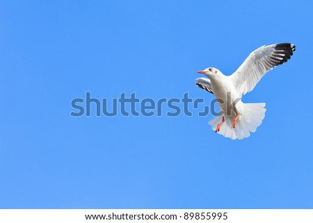 Flying seagull and blue sky