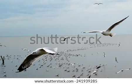 flying seagull bird - stock photo