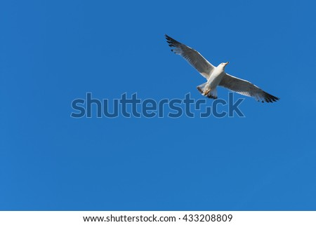 Flying seagull / Bird flying in the blue sky / Spread wings / Flying / Free as a bird / Freedom in the sky / Blue sky with bird flying  - stock photo