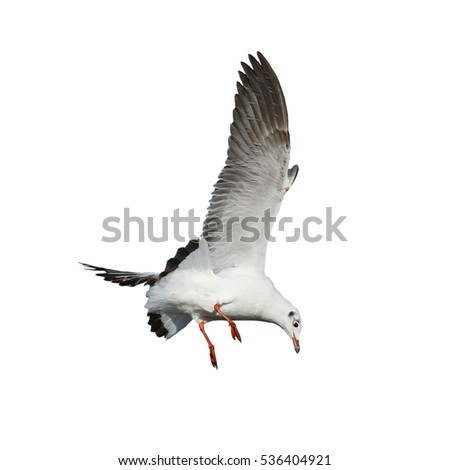flying seagull in Blue sky with clouds