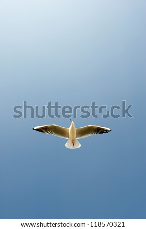 Flying seagull in the blue sky - stock photo