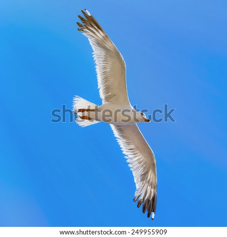 Flying Seagull Over The Blue Sky - stock photo