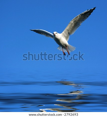 flying seagull over water - stock photo