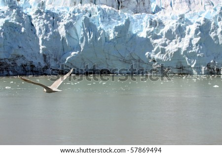 Flying seagull over water near glacier - stock photo