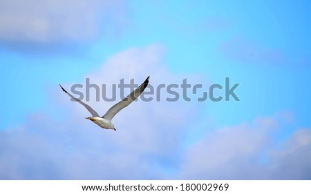 flying seagull seen from the back - stock photo