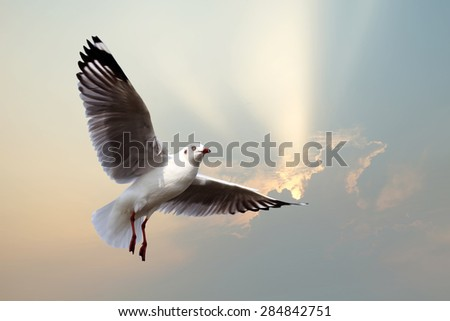 flying seagull with beautiful sunbeam background
