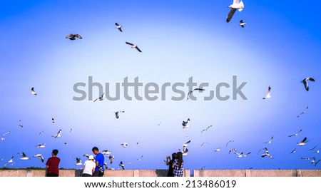Flying seagulls are eating food