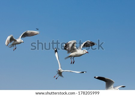 flying seagulls in action at Bangpoo Thailand - stock photo