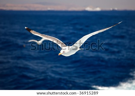 Flying seagulls over blue water - stock photo