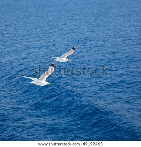 Flying seagulls over blue water background - stock photo