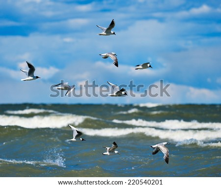 Flying seagulls over surface of the sea - stock photo
