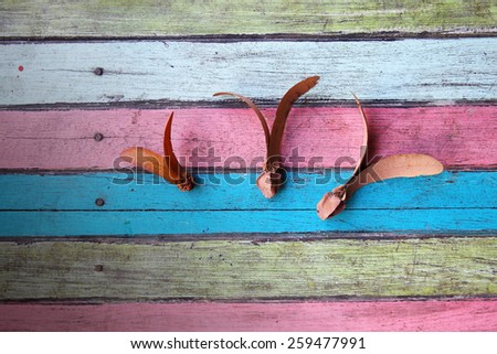 flying seed on colorful wooden panel - stock photo