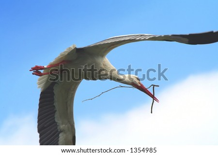 flying stork with a branch for his nest