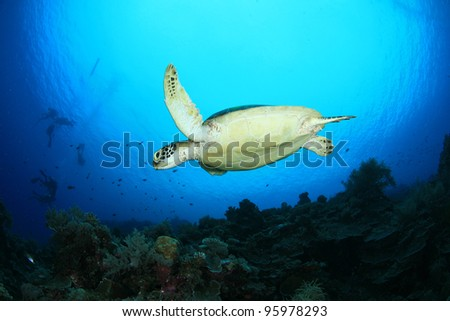 Flying Turtle - stock photo