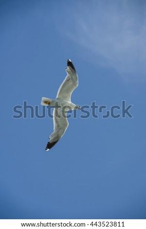 Flying white albatross - stock photo