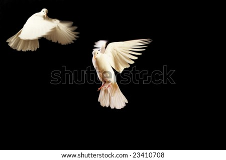 flying white doves isolated on white