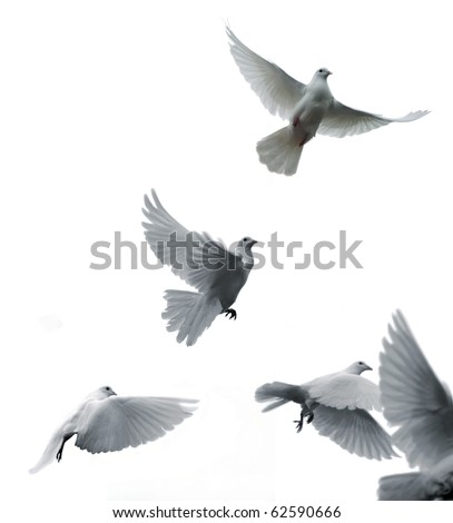 Flying white pigeons - stock photo