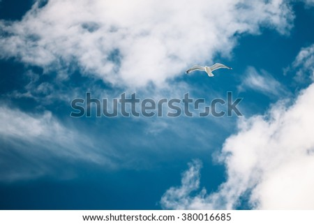 Flying White Seagull In Blue Sunny Cloudy Sky. Copy space.