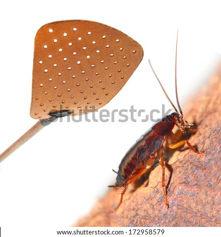 Flyswatter and cockroach. Ecological pest control. - stock photo