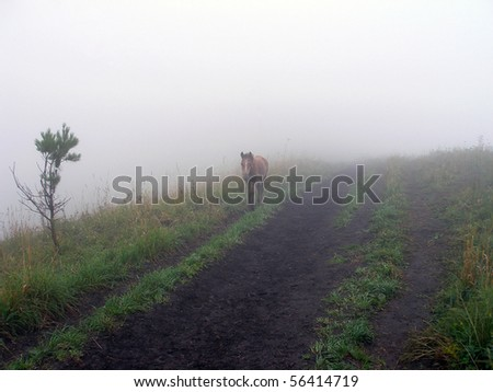 Foal on a foggy footpath, morning, August, Altai, Russia - stock photo