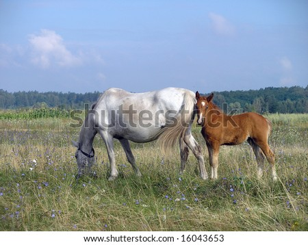 foal with horse