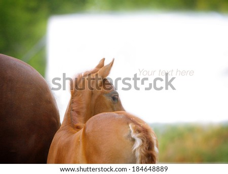 foal with mother - stock photo