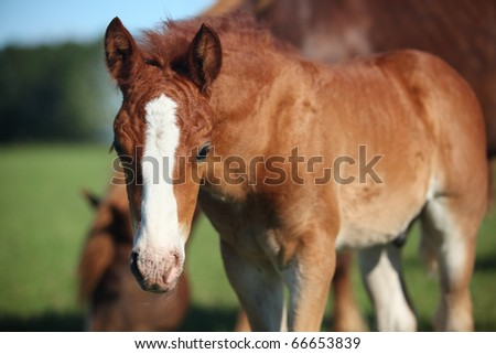Foal with mother grazing on meadow - stock photo