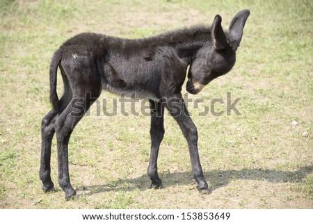 Foal woke up in the zoo - stock photo