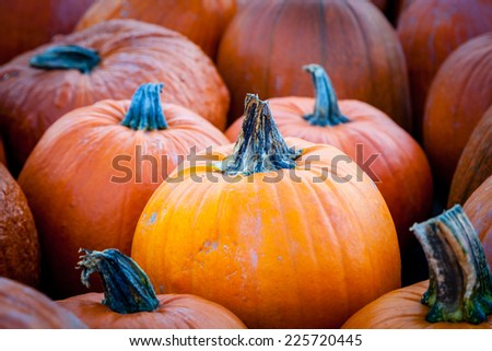 Focus on a pumpkin among others at a local farmer's market for Thanksgiving. Autumn theme background. - stock photo