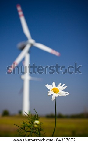 focus on the white flower - stock photo