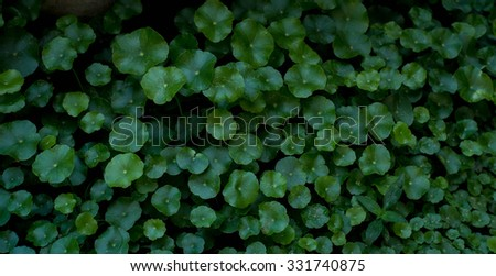 Focus weeds with Green - stock photo