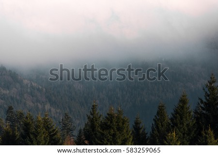 fog above the trees in the mountains