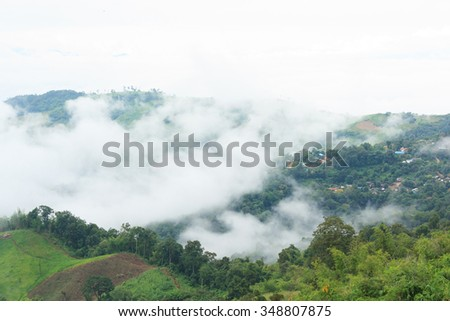 Fog and green forest on mountain in Doi Chang, Chiang Rai, Thailand. - stock photo