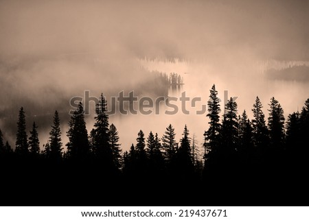 Fog and pine tree on rugged mountainside during storm - stock photo