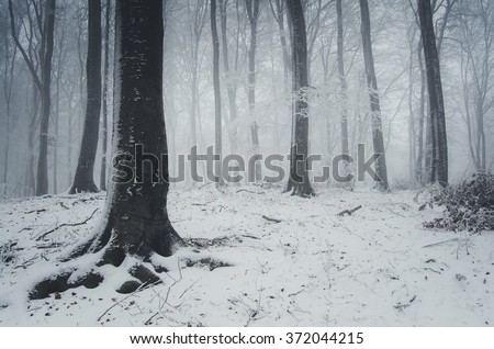 fog and snow in winter forest - stock photo