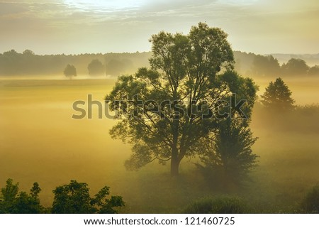Fog and trees in the morning sun rays. - stock photo