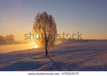Fog at the Elbe river near Torgau during a winter sunrise. Focus on tree