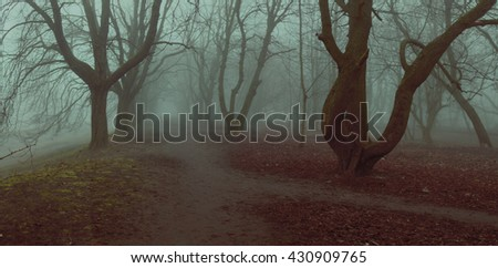 fog background panorama mystycal park alley autumn trees fall foliage shallow depth of field stylized filter - stock photo