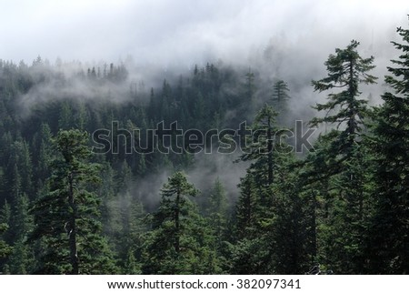 Fog cover the forest. Misty view from Larch Mount. USA Pacific Northwest, Oregon. - stock photo