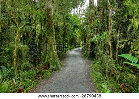Fog covered mountains in a New Zealand rainforest landscape - stock photo