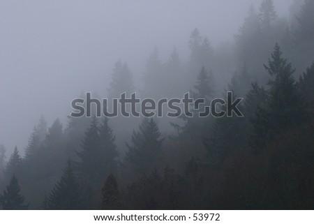 Fog Enshrouded Trees - stock photo