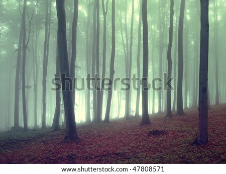fog in a beautiful forest - stock photo