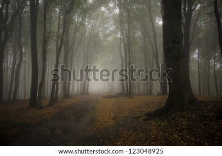 fog in a dark forest - stock photo