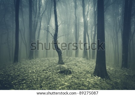 fog in a forest with black trees - stock photo