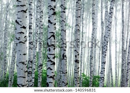 Fog in birch forest - stock photo