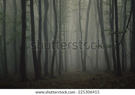 fog in dark forest - stock photo