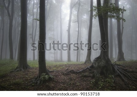 fog in forest after rain - stock photo