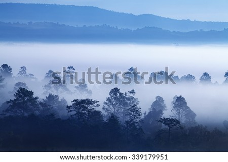 Fog in forest at Khao-kho Phetchabun,Thailand - stock photo